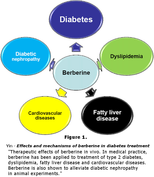 diabetes mellitus research essay Health term papers (paper 18065) on diabetes : what is diabetes diabetes mellitus is a group of diseases characterized by high levels of.